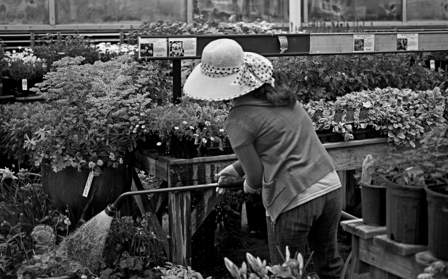 working for the plants copy23